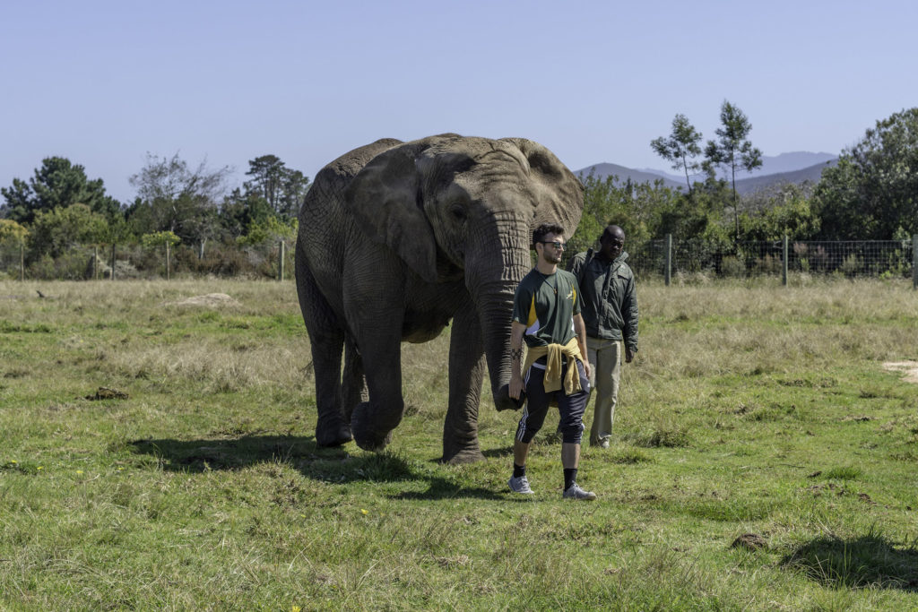 Safari and Elephant experience in South Africa
